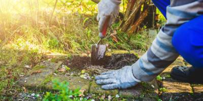 Things to Check before Picking Landscaping Company