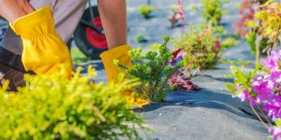 Important Questions to Ask Your Landscape Contractor