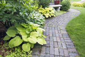 Deciduous plants