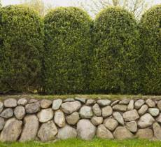 Evergreen Trees, shrubs and plants