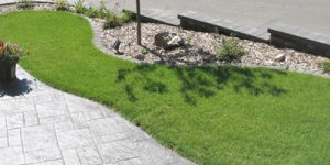 Synthetic, green grass services