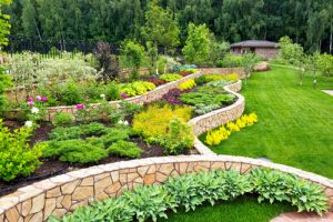 Deciduous and Evergreen residential landscape