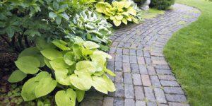 Trees, Shrubs and Plants Summary