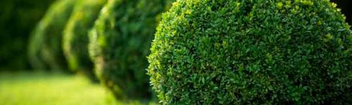Why Choose a Landscaping Company? 1