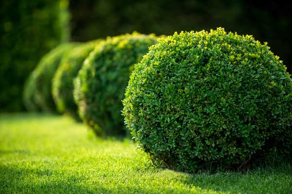 Trees, Shrubs and Plants 1