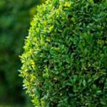 Why Choose a Landscaping Company? 4