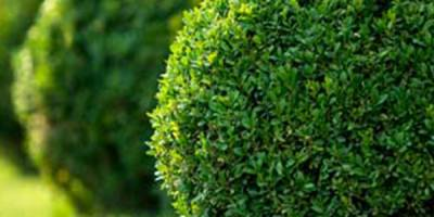 Why Choose Sungreen Landscaping?
