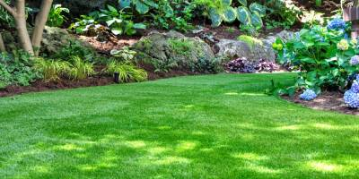 Top Landscaping Trends to Try in 2020